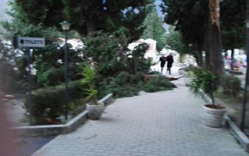 Forte vento un albero caduto al cimitero di Cervinara.