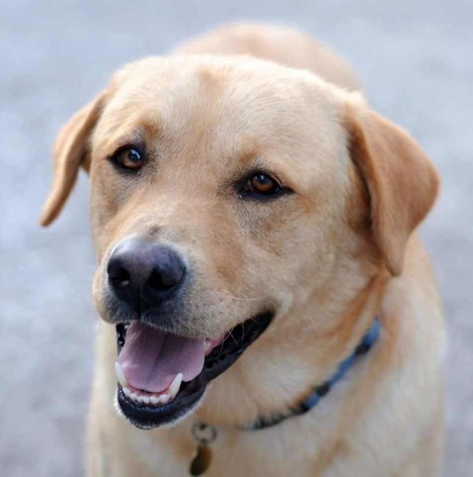 Sant'Agata | Obblighi per i proprietari dei cani.