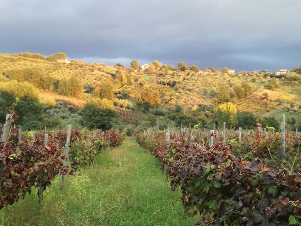 Montesarchio | Damiano: orgoglioso del nostro Sannio Città Europea del Vino