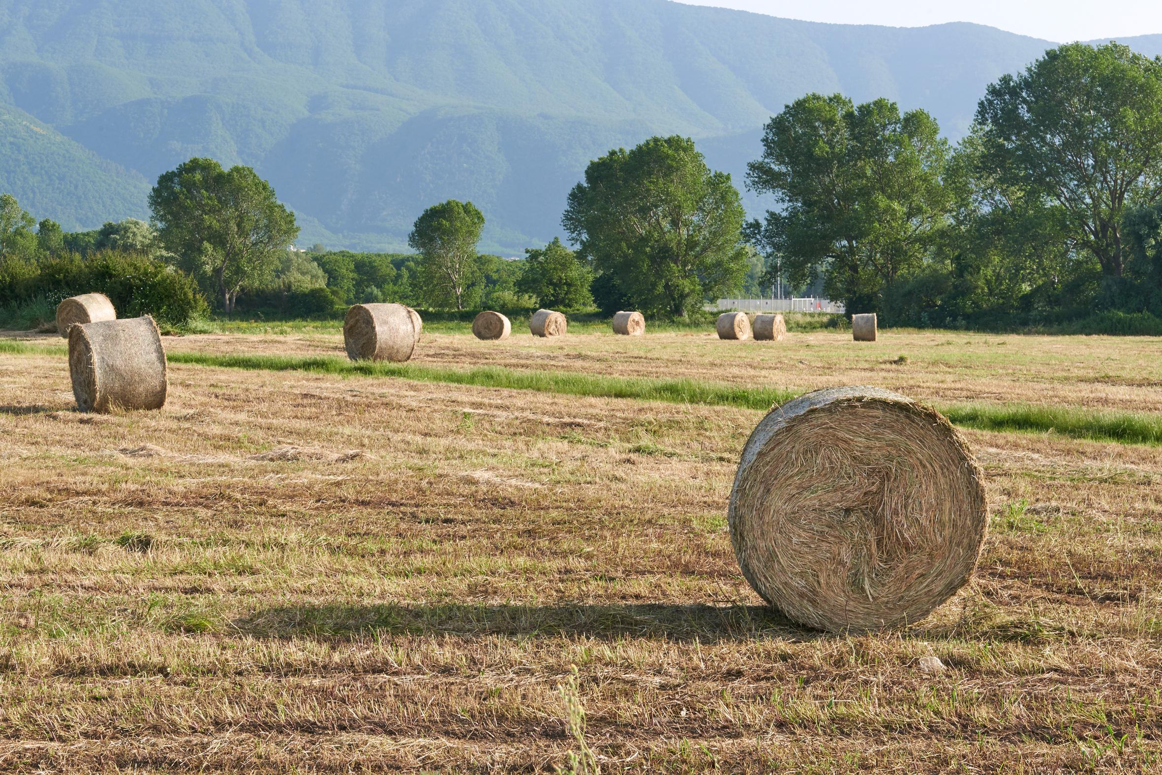 """""""Qualità Sannio"""" è il nuovo distretto Agroalimentare"""