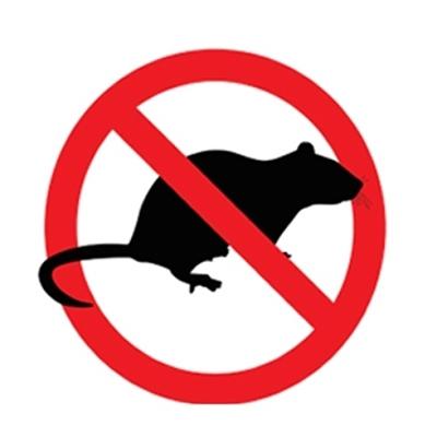 Airola, ratti: domani chiusa Primaria Padre Pio
